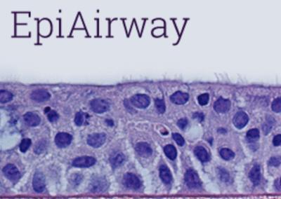 Cross section through EpiAirway™