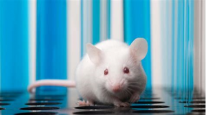 LLNA tests involve suffering for mice
