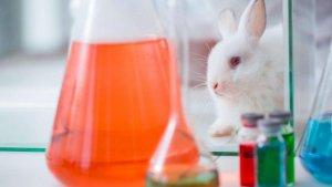 Rabbits in lab